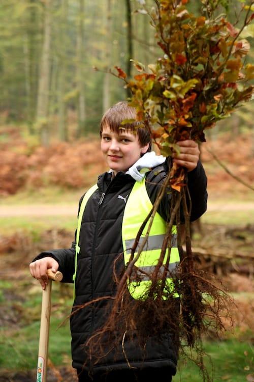 Pro verkauftem Paket Laminat der LOGOCLIC-Edition pflanzt das Unternehmen einen Baum. So wird vielfältiger Lebensraum für Pflanzen und Tiere geschaffen. (Foto: epr/Logoclic)