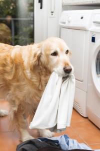 Auch wenn der beste Freund des Menschen so engagiert mithilft: Die Hundedecke behält bei der üblichen Wäsche oft einen unangenehmen Geruch. Foto: djd/www.geruchskontrolle.de
