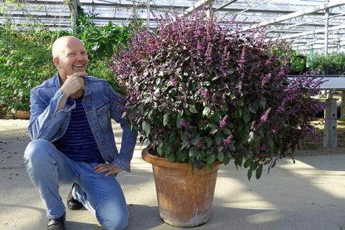 Daniel Rühlemann weiß, wie aus einem kleinen Basilikum-Pflänzchen ein solches Prachtexemplar wird. Foto: djd/Rühlemann's Kräuter und Duftpflanzen