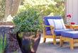"""""""BrazelBerries"""" wachsen kompakt wie eine Buchsbaum-Kugel und variieren im Laub wie eine Lavendelheide. Foto: djd/BrazelBerries"""