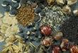 Wer Saatgut gewinnen möchte, sollte mit einfachen Sorten beginnen, um erste Erfahrungen zu sammeln. Foto: djd/Rühlemann's Kräuter und Duftpflanzen