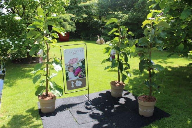 die welt der pflanzenneuheiten im park der g rten. Black Bedroom Furniture Sets. Home Design Ideas