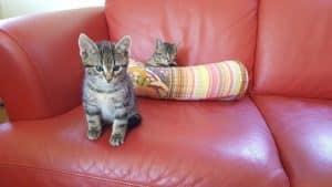Katzen hinterlassen Kratzspuren, leider auch auf der geliebten Ledercouch