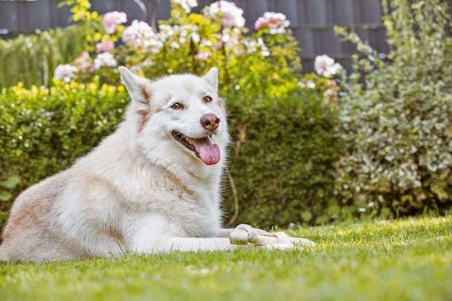 Auch der Hund hat Freude an einem tiergerecht gestaltetem Garten.