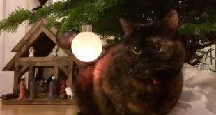 Ist Ihre Katze eine Freigängerin kann es in der kalten Jahreszeit zu Stress kommen.
