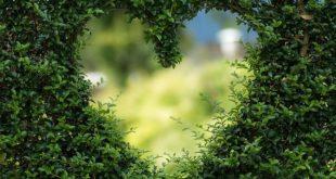 Eine neue Gartengestaltung kann den Blickwinkel erheblich verbessern.